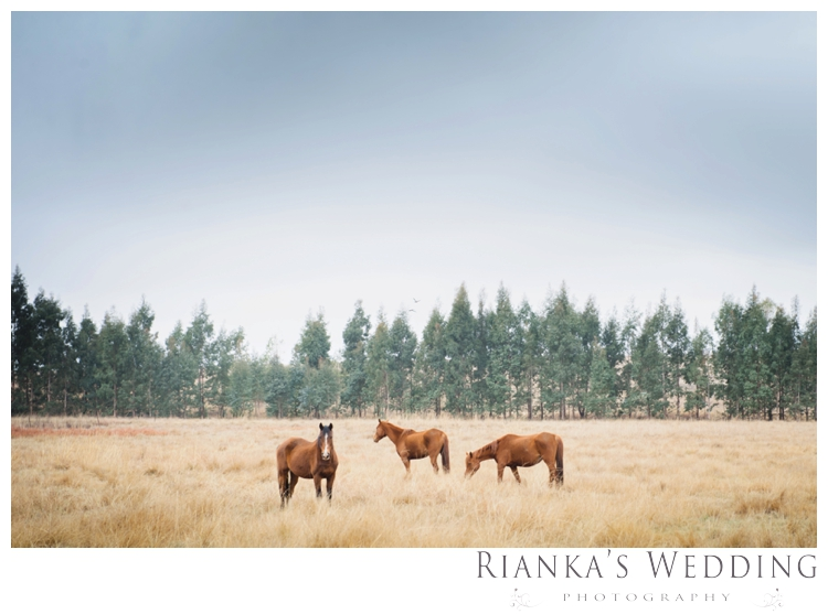 riankas weddings gauteng wedding photographer jenna dayne florence guest farm wedding00004