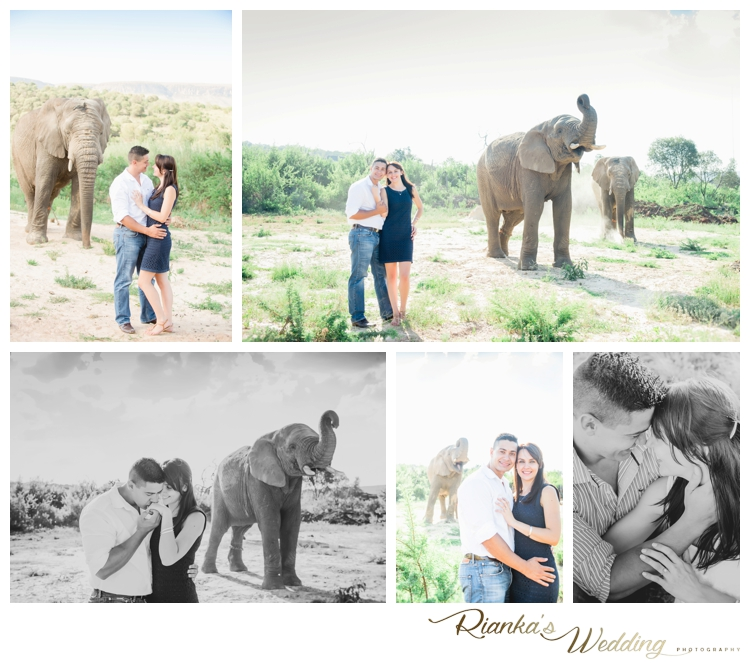 riankas wedding photography elephant engagement shoot michelle morne eshoot00001