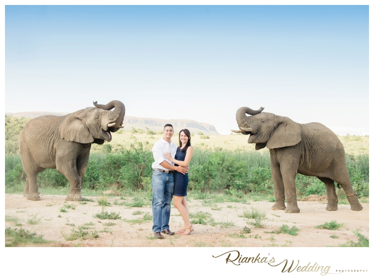 riankas wedding photography elephant engagement shoot michelle morne eshoot00003