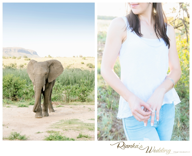 riankas wedding photography elephant engagement shoot michelle morne eshoot00004