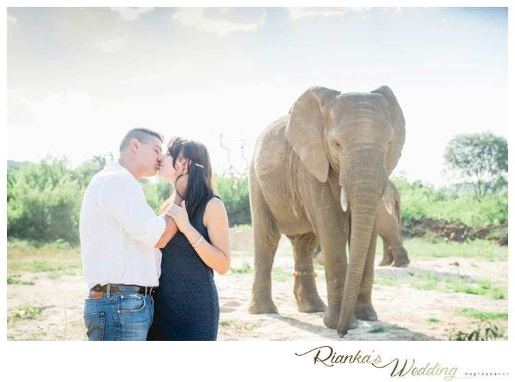 riankas wedding photography elephant engagement shoot michelle morne eshoot00012
