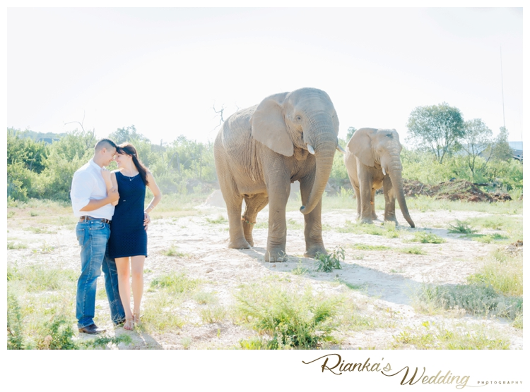 riankas wedding photography elephant engagement shoot michelle morne eshoot00018