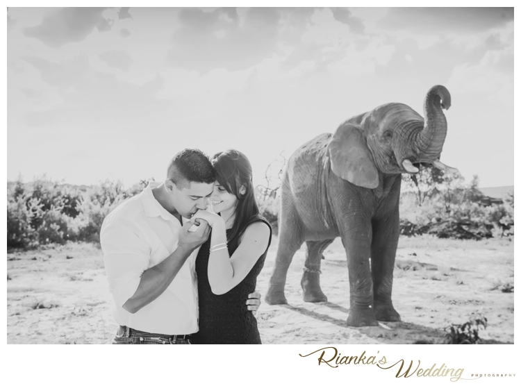 riankas wedding photography elephant engagement shoot michelle morne eshoot00022
