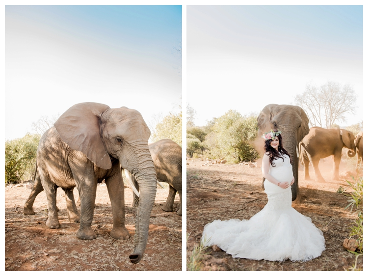 riankas-weddings-elephants-glen-afric-wedding-maternity00011